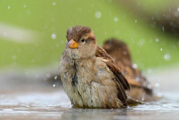 birds-in-rain- (20)