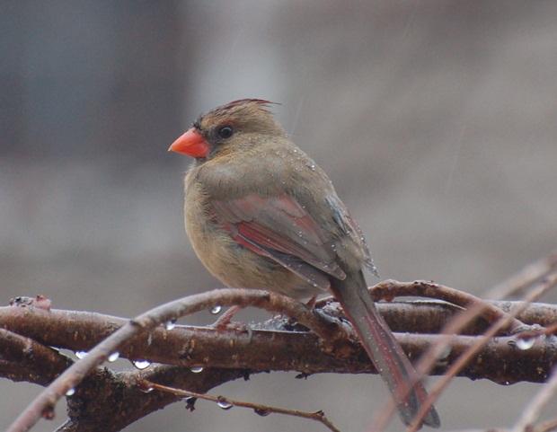 birds-in-rain- (4)