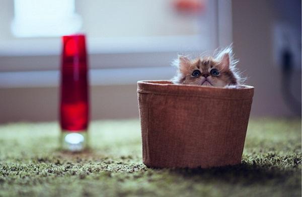 cute-kitten-daisy- (3)