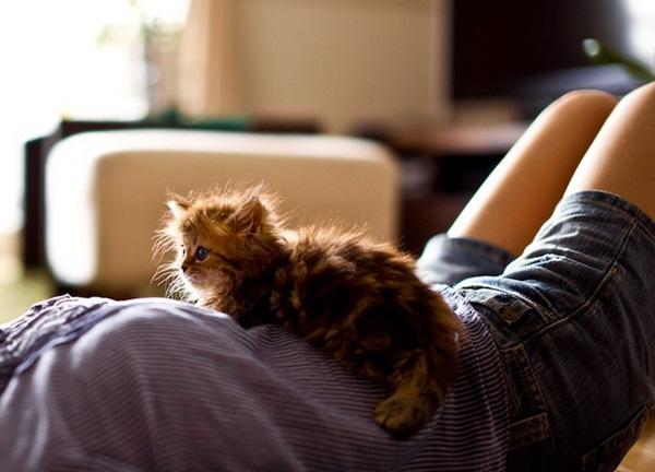 cute-kitten-daisy- (5)