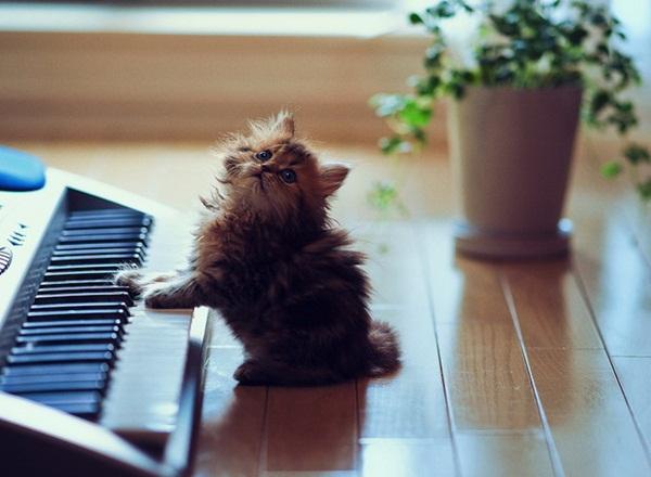 cute-kitten-daisy- (6)
