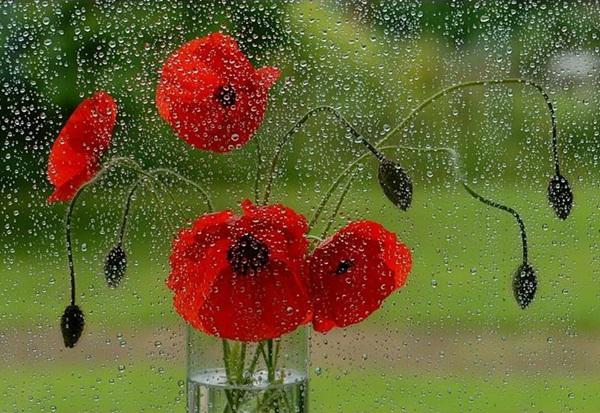 flower-in-rain- (4)