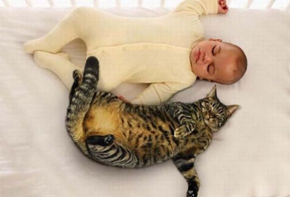 babies-and-cats- (11)