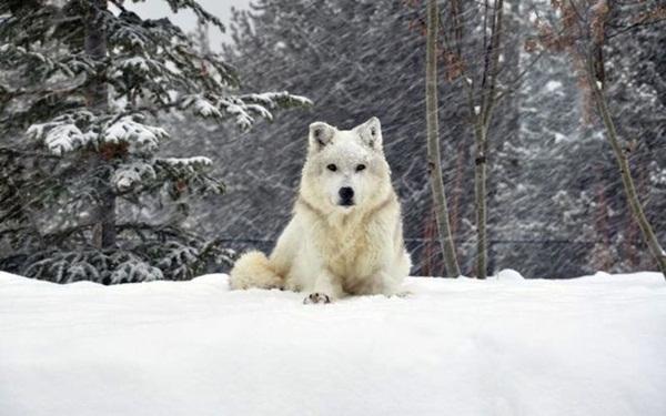 animals-in-snow- (14)