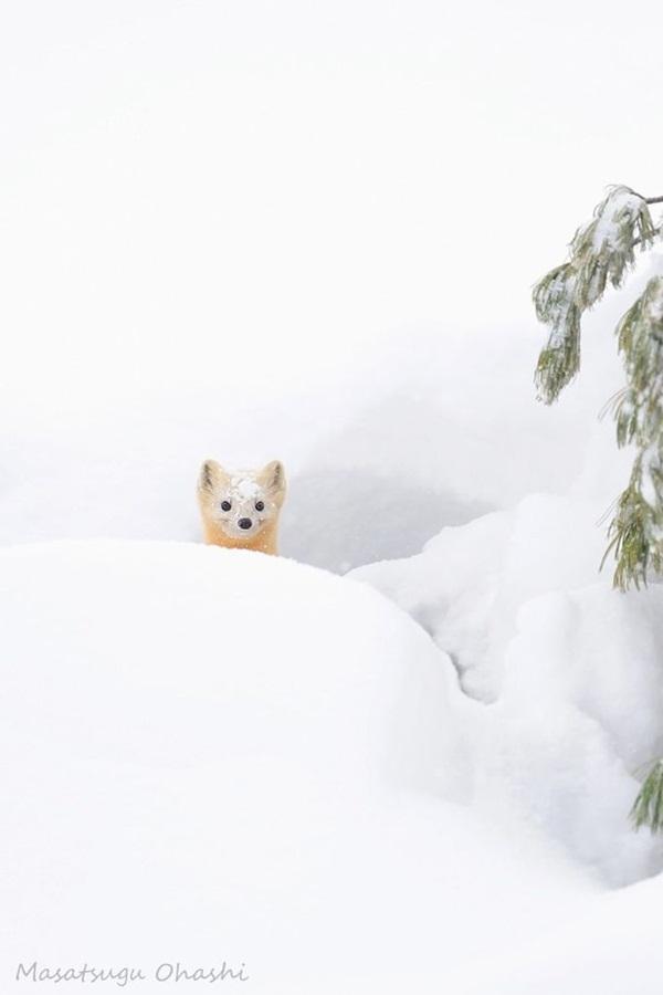 animals-in-snow- (16)
