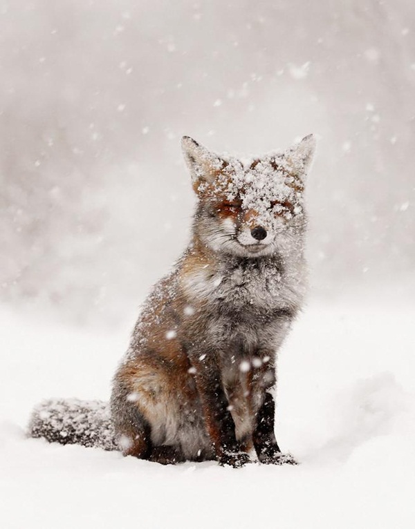 animals-in-snow- (25)