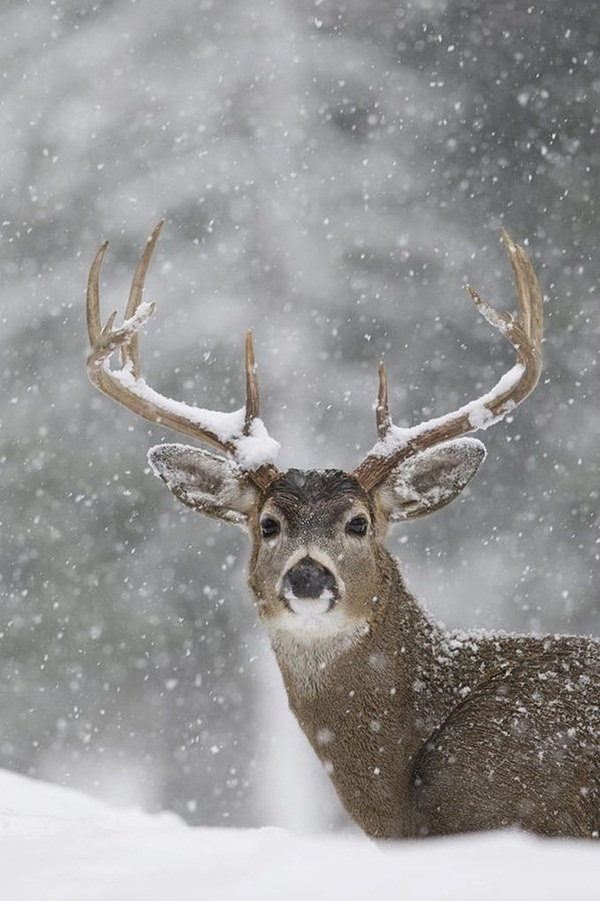 animals-in-snow- (26)