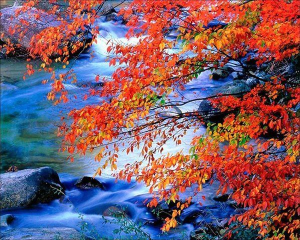 beautiful-autumn-20-pictures- (11)