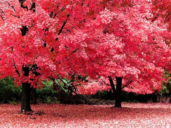 beautiful-autumn-20-pictures- (12)