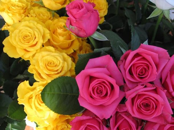 best-roses-26-photos- (11)