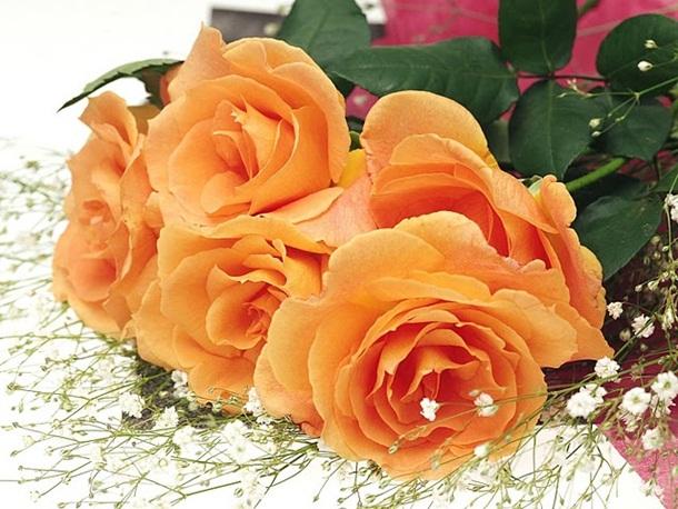 best-roses-26-photos- (19)