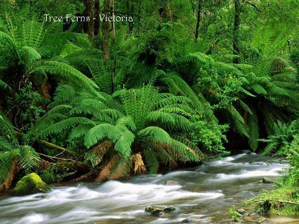 places-to-see-in-australia-36-photos- (6)