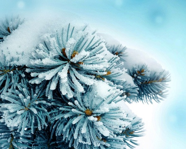 26-winter-photos- (6)