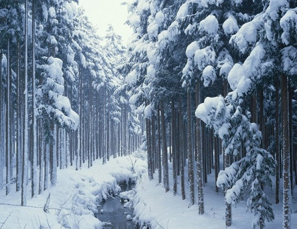 26-winter-photos- (7)