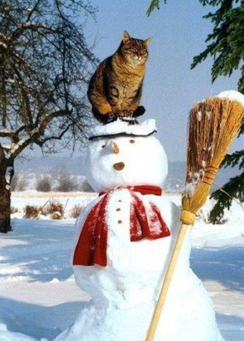 fun-with-snow- (9)