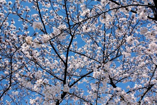 spring-wallpapers- (12)