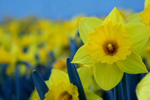 spring-wallpapers- (4)