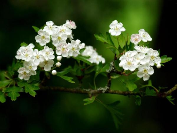 spring-wallpapers- (7)