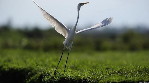 birds-wallpaper-20-photos- (3)