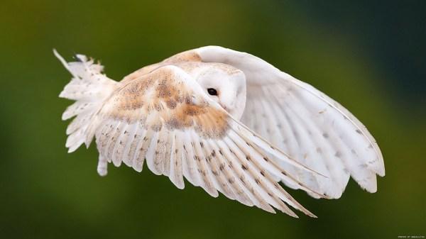 birds-wallpaper-20-photos- (6)