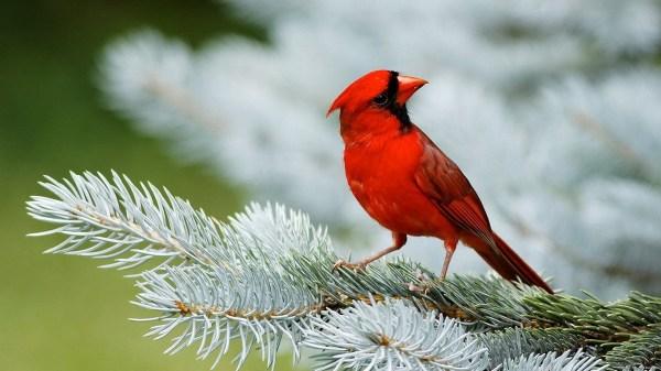 birds-wallpaper-20-photos- (7)