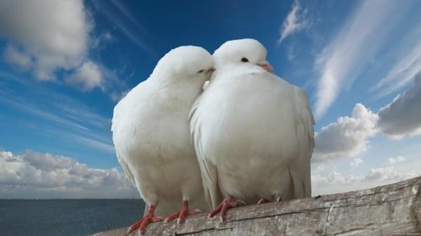birds-wallpaper-20-photos- (9)