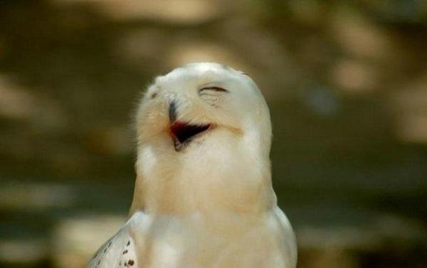 funny-birds-40-photos- (1)