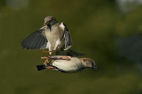 funny-birds-40-photos- (15)