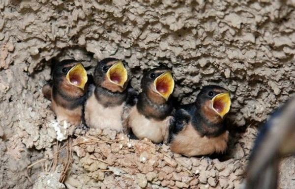 funny-birds-40-photos- (31)