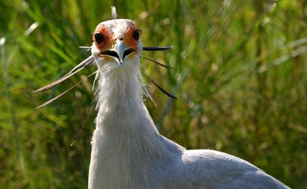 funny-birds-40-photos- (39)