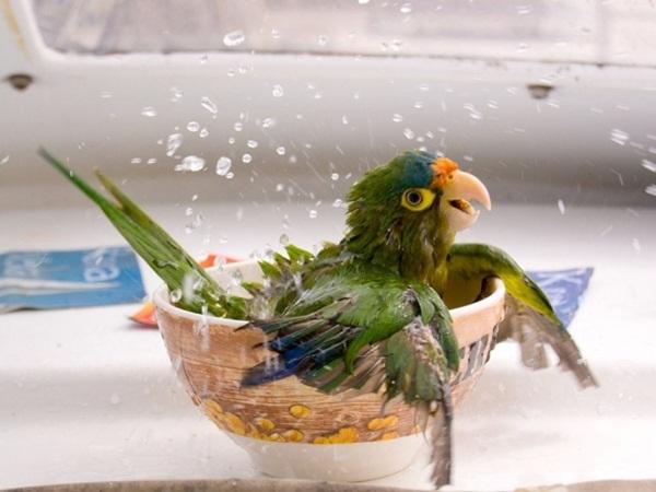 funny-birds-40-photos- (4)