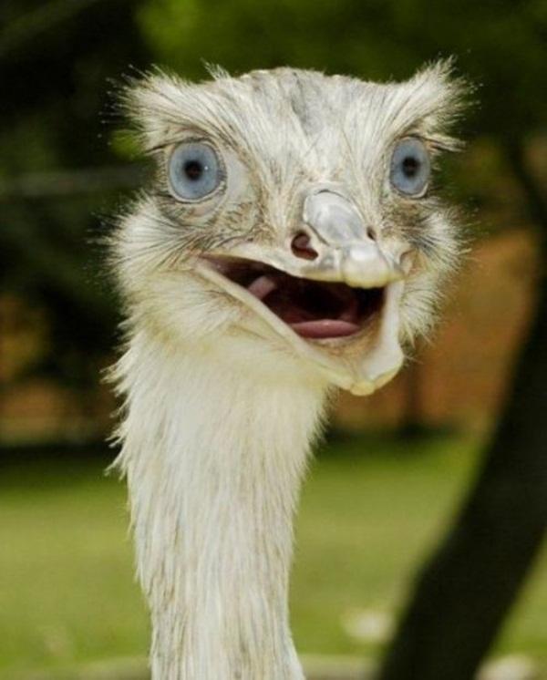 funny-birds-40-photos- (40)