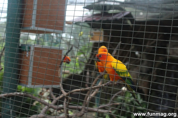 kl-bird-park-best-things-to-see-in-kuala-lumpur- (15)