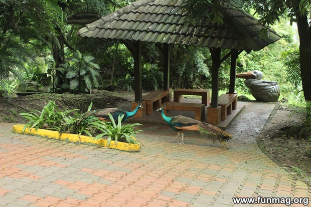 kl-bird-park-best-things-to-see-in-kuala-lumpur- (48)