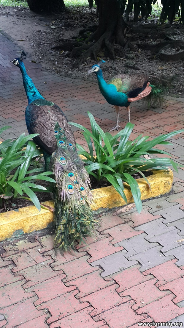 kl-bird-park-best-things-to-see-in-kuala-lumpur- (8)