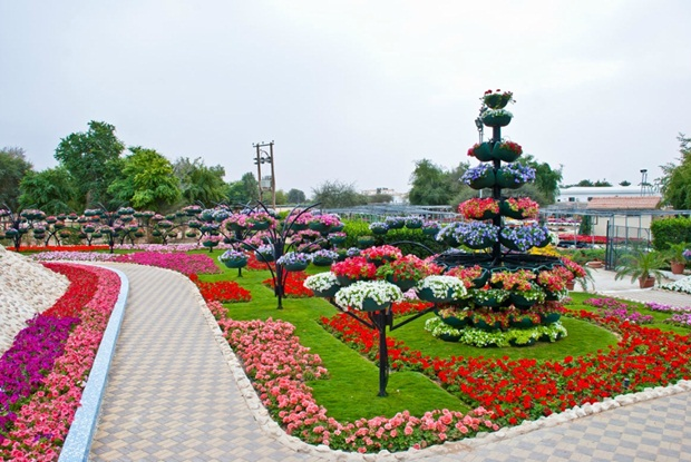 al-ain-paraidse-beautiful-flowers-park- (1)
