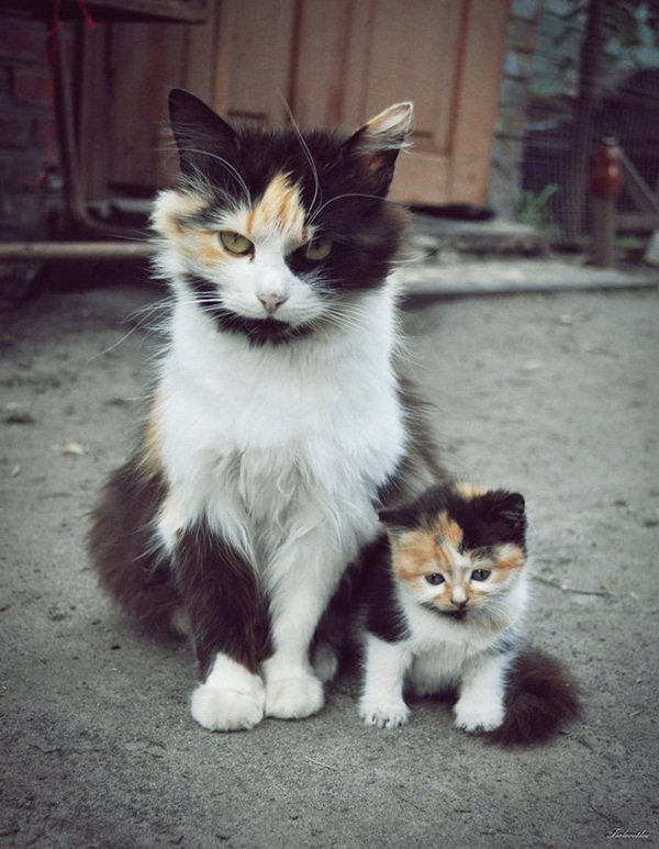 baby-animals-with-their-parents- (18)
