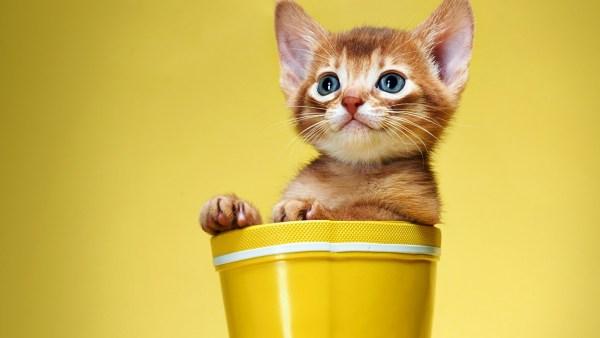 cute-cats-wallpaper-20-photos- (11)