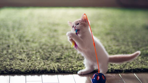 cute-cats-wallpaper-20-photos- (19)