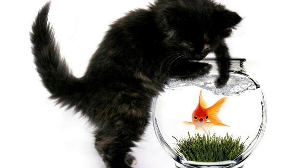 cute-cats-wallpaper-20-photos- (5)