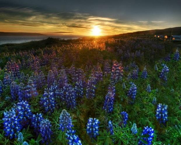 field-of-flowers- (10)