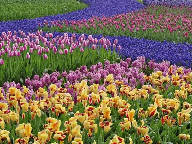 field-of-flowers- (31)