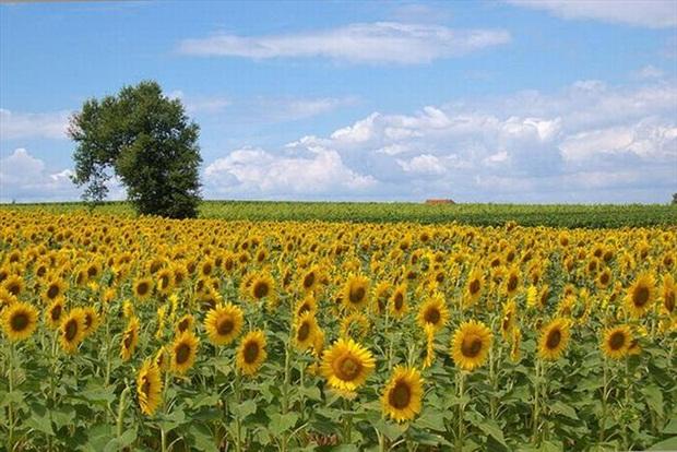 field-of-flowers- (32)