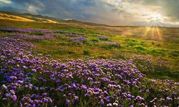 field-of-flowers- (6)