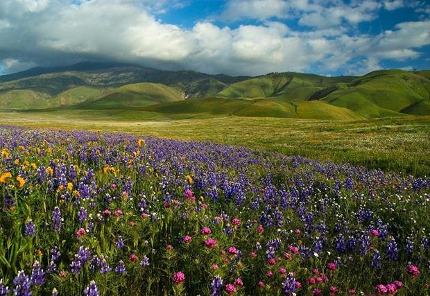field-of-flowers- (7)