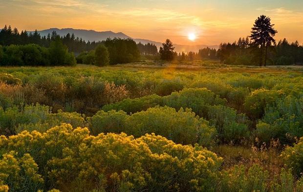 field-of-flowers- (8)