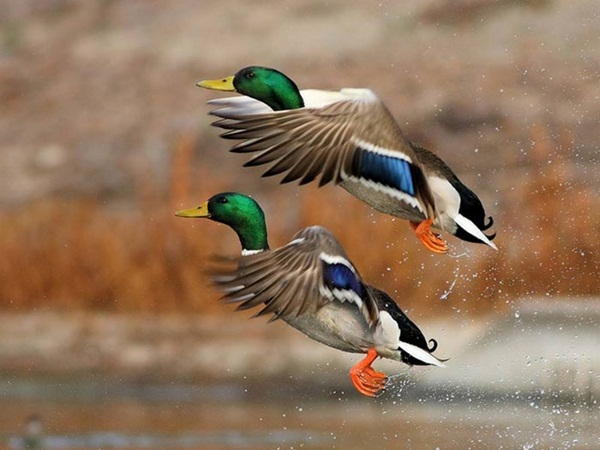 most-beautiful-birds-in-the-world-37-photos- (5)
