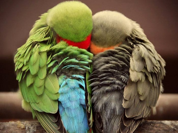 most-beautiful-birds-in-the-world-37-photos- (7)