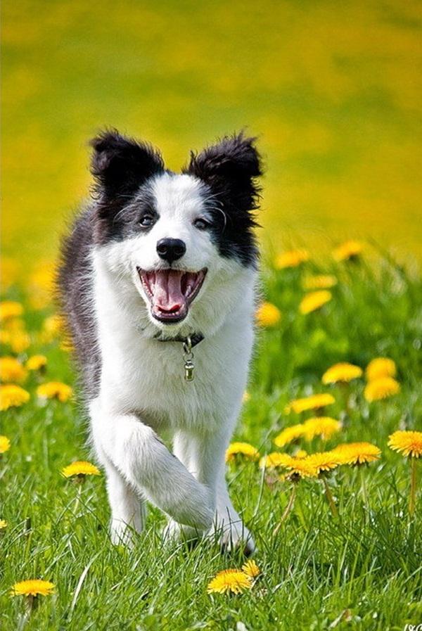 dogs-in-flowers- (1)