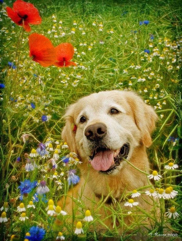 dogs-in-flowers- (11)
